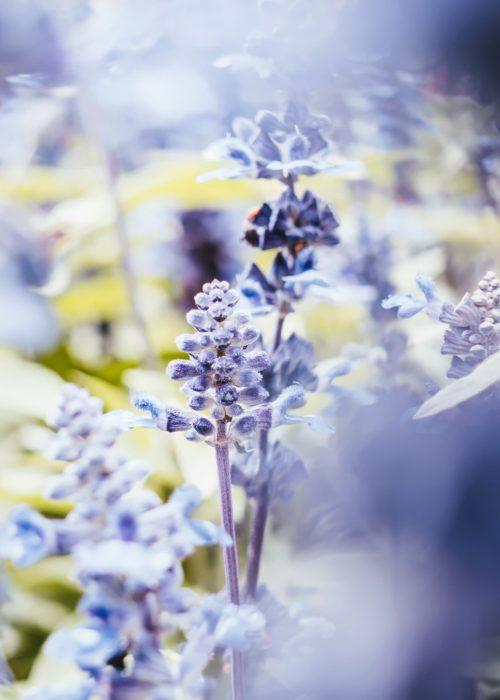 fleurs bleu clair et jaune