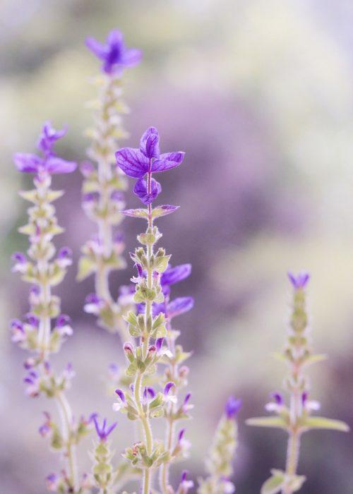purple, pastel, soft